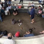 <span>Bắt quả tang 13 người cá cược đá gà tại Phú Yên</span>