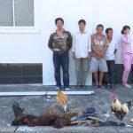 <span>Bắt quả tang tụ điểm tổ chức đá gà ăn thua bằng tiền tại An Giang</span>