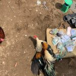 Bắt quả tang 14 đối tượng tham gia đá gà ăn tiền tại TP. Long Xuyên